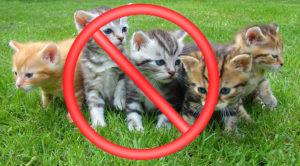 Nechtěná koťata