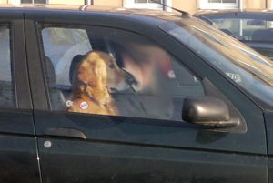Pes v autě na sedačce spolujezdce